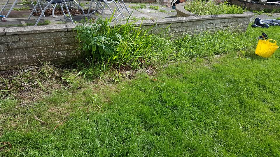 Garden makeover border 2