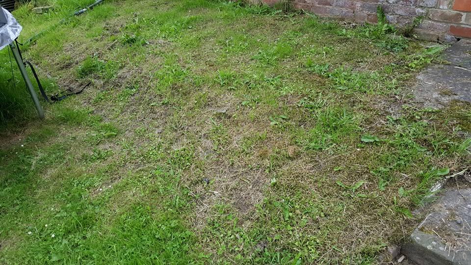 Garden makeover overgrown border