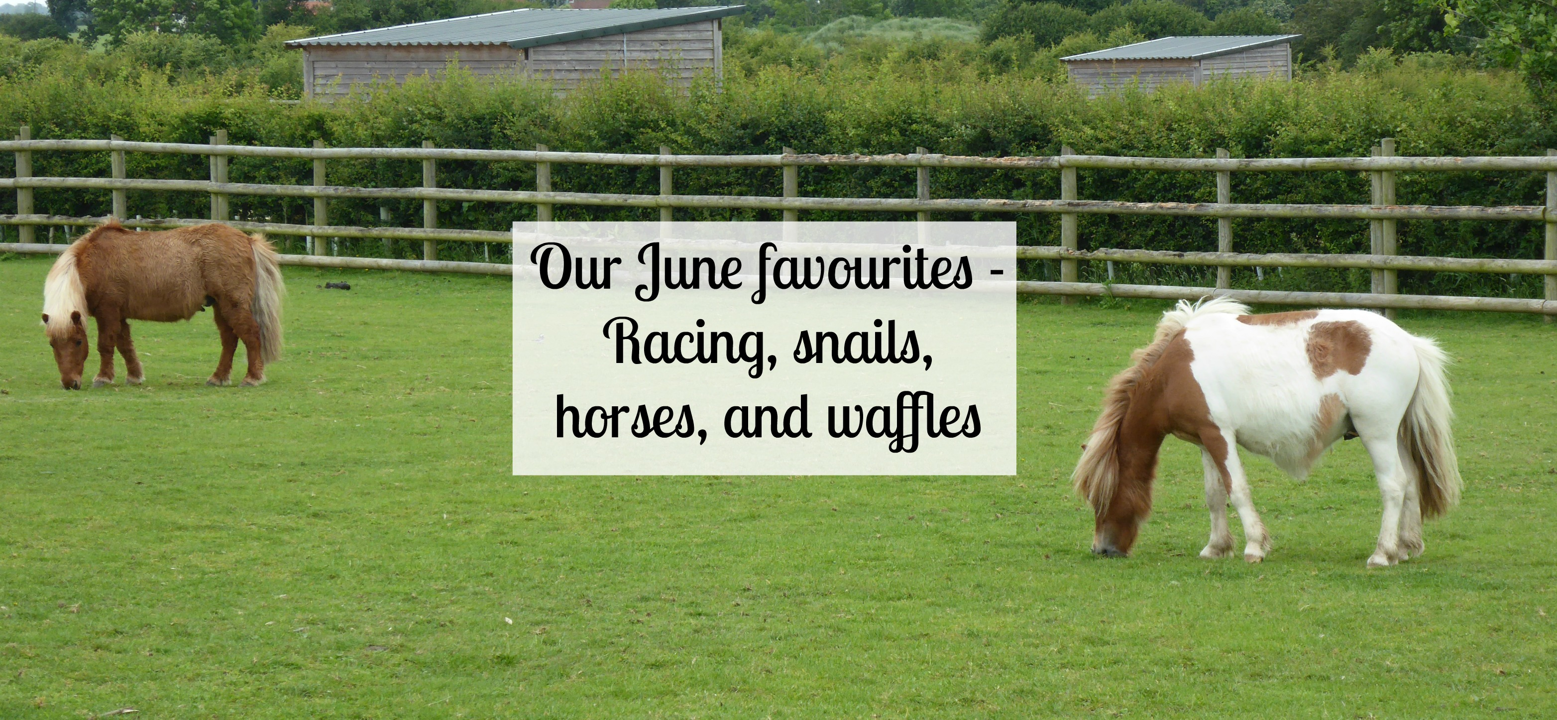Our June favourites
