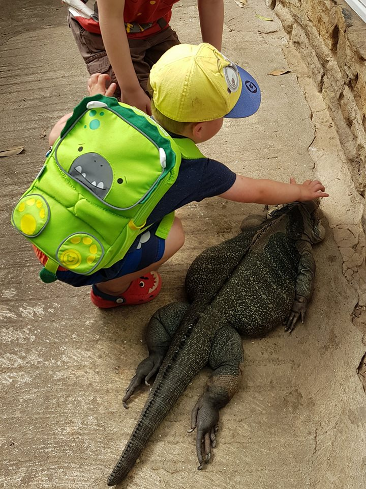 Toddlepak Backpack - stroking iguanas