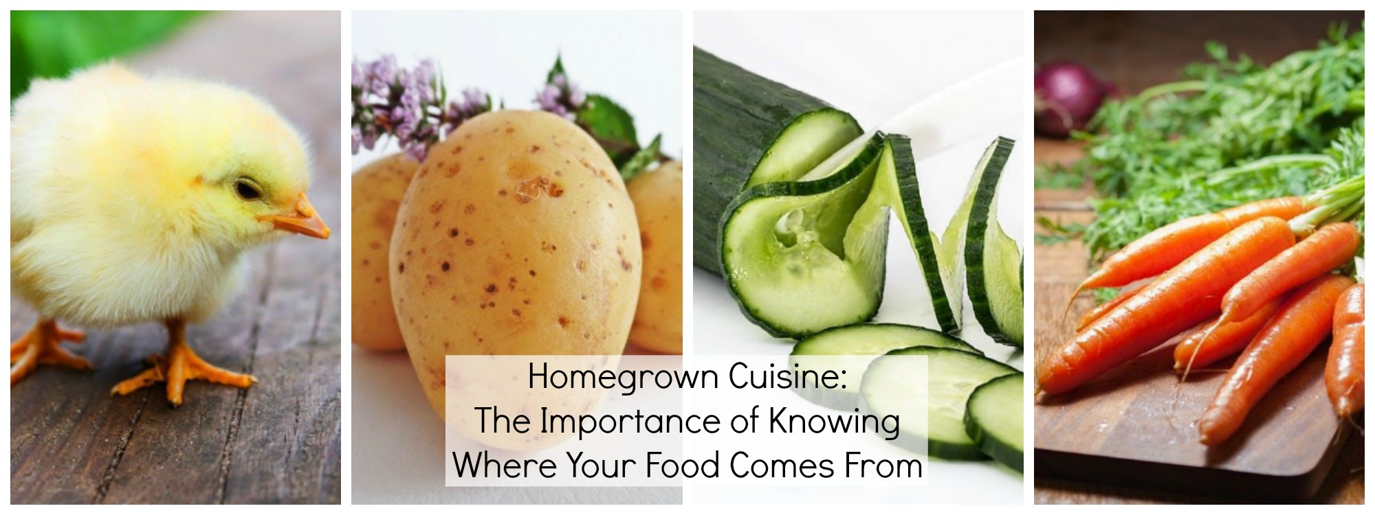 Homegrown Cuisine The Importance of Knowing Where Your Food Comes From