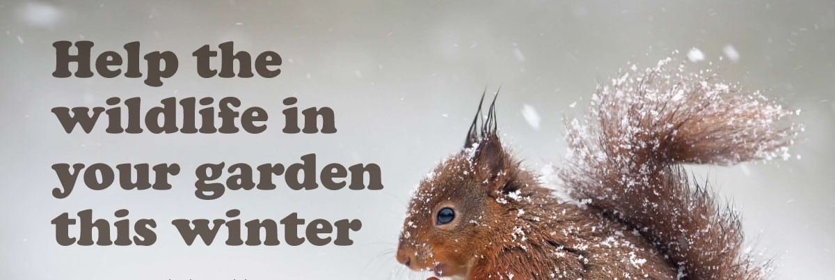 help the wildlife in your garden this winter