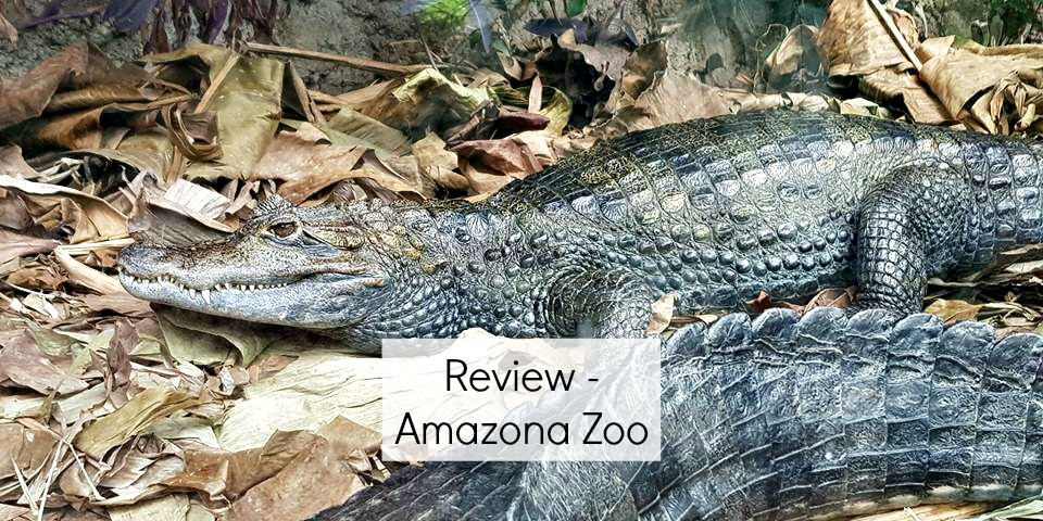 Amazona review