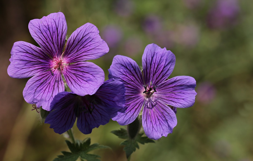Flower, purple flower