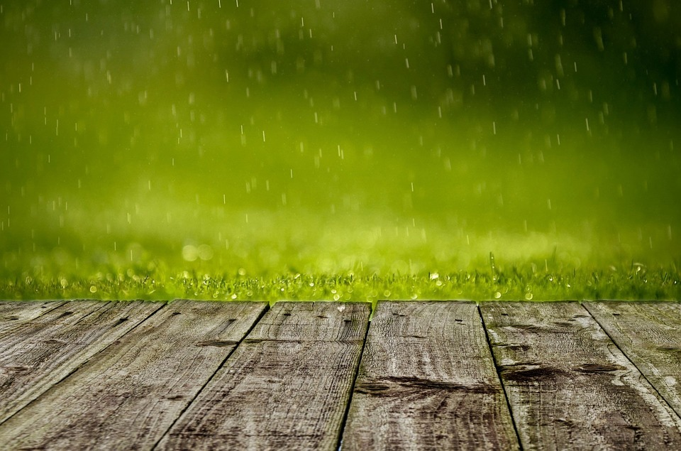 Before The Flood - Tips For A Waterlogged Garden