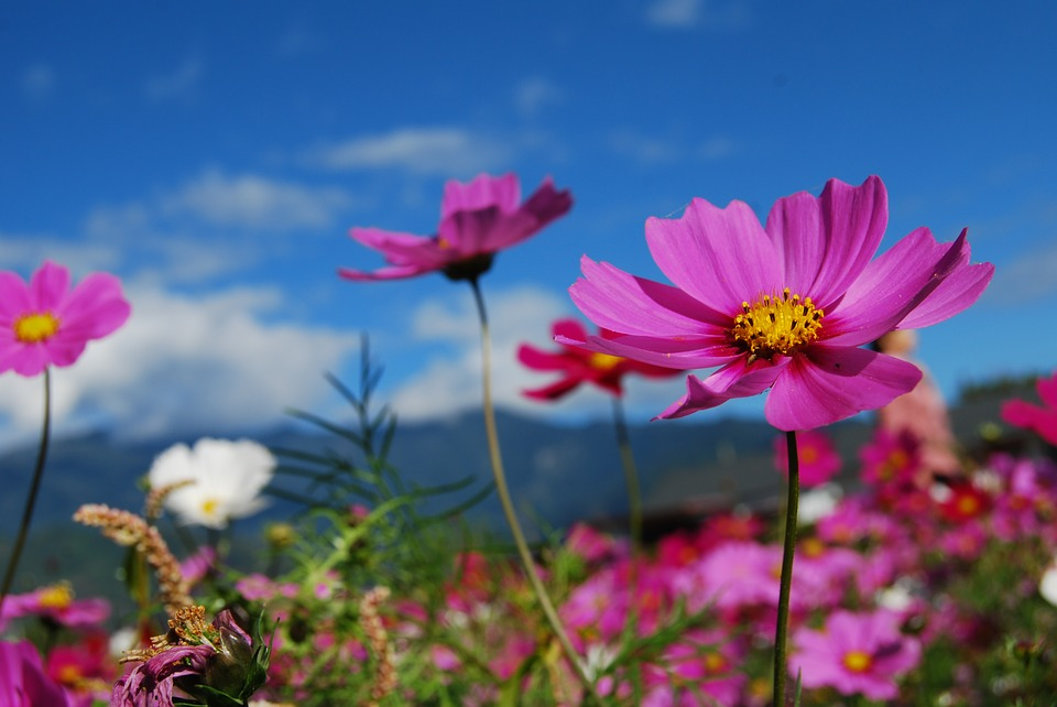 The Best Cottage Flowers For Your Garden