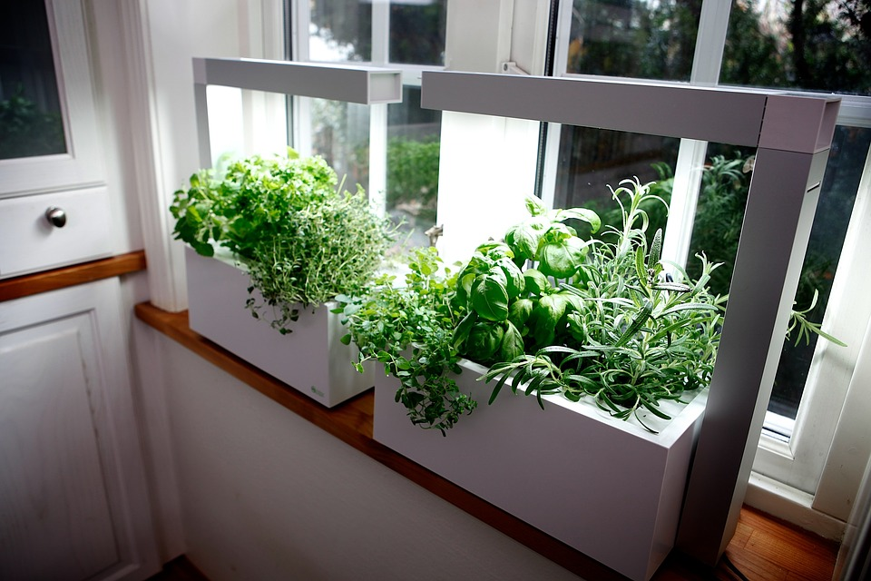 Herb Conservatory Hydro System Growing Herbs Gift