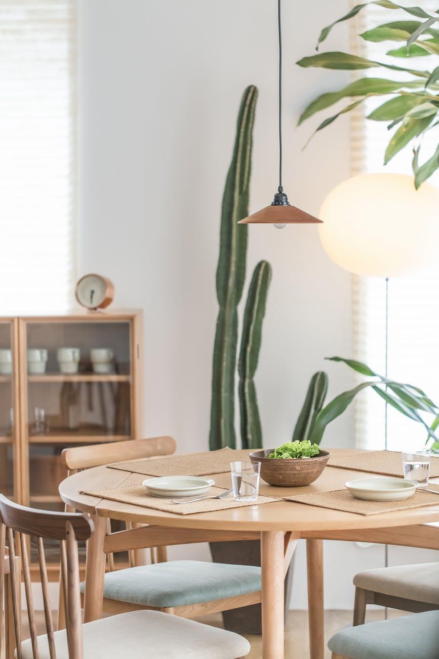 Cactus plant in dining room