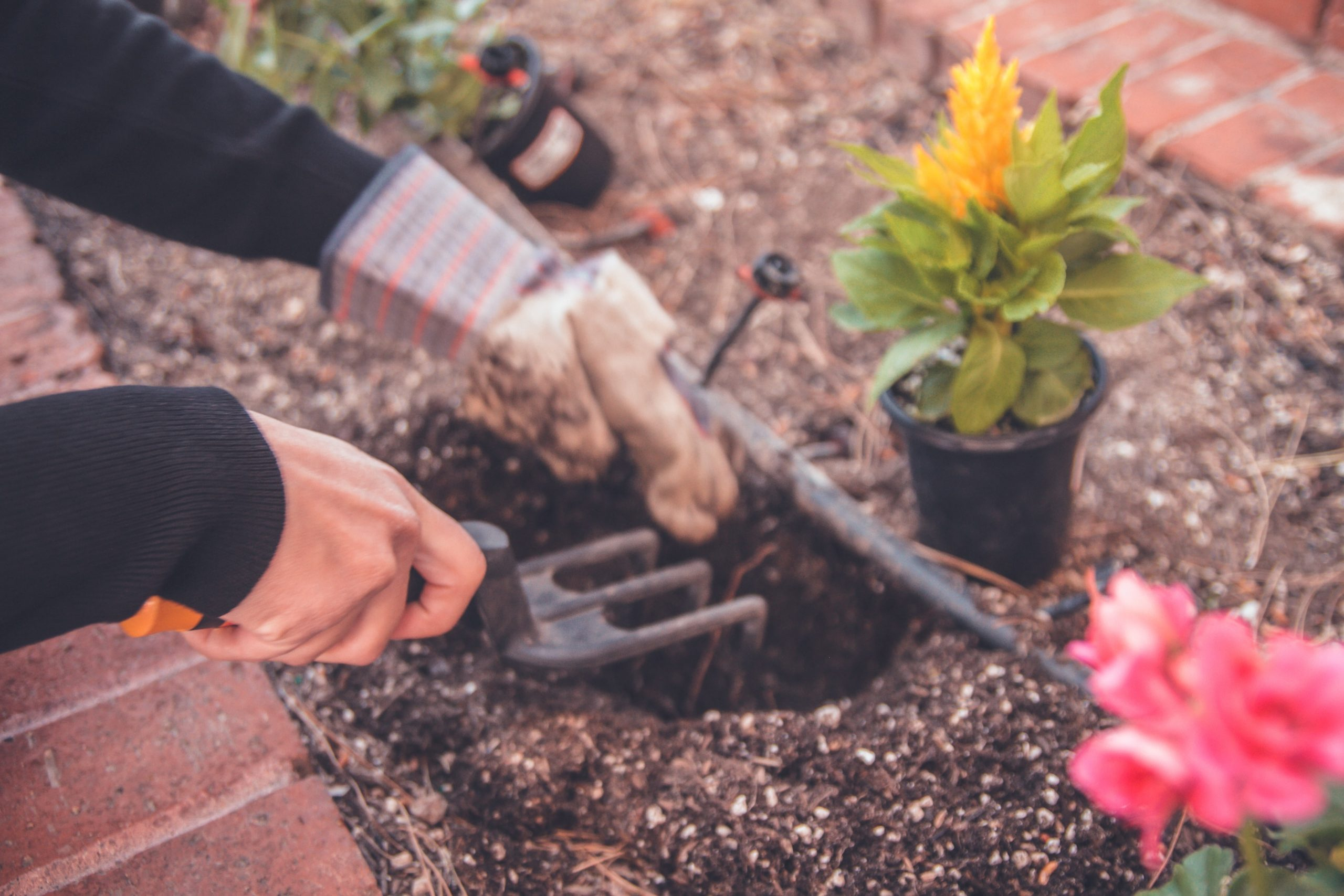 Seven Tips For A Low Maintenance Garden