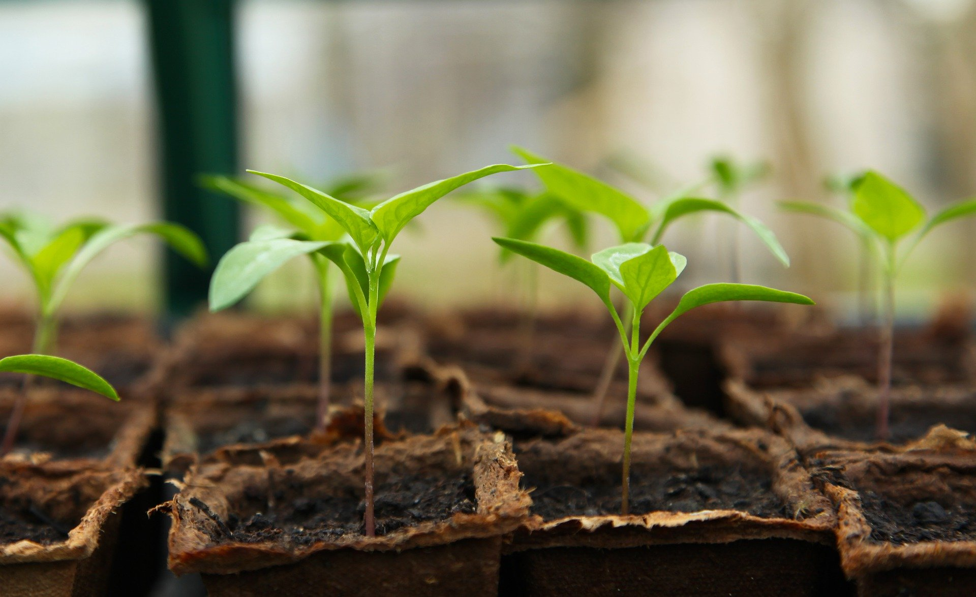 seedlings, 4 Ways To Make Better Use Of Your Garden All Year Round
