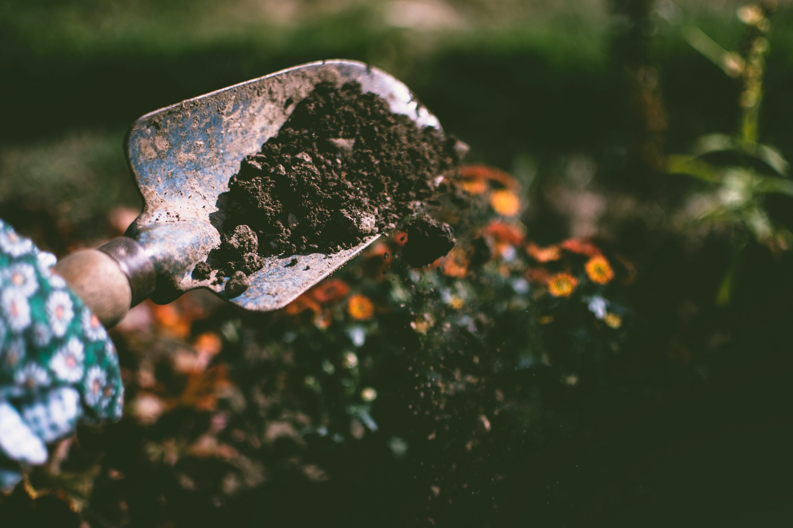 Six Low Maintenance Gardening Tips For Busy People