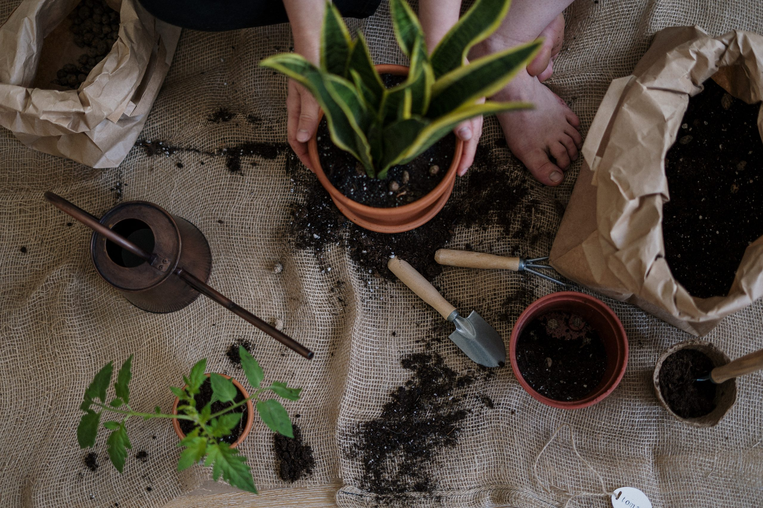 potting plants, How To Get Organised As A Newbie Gardener