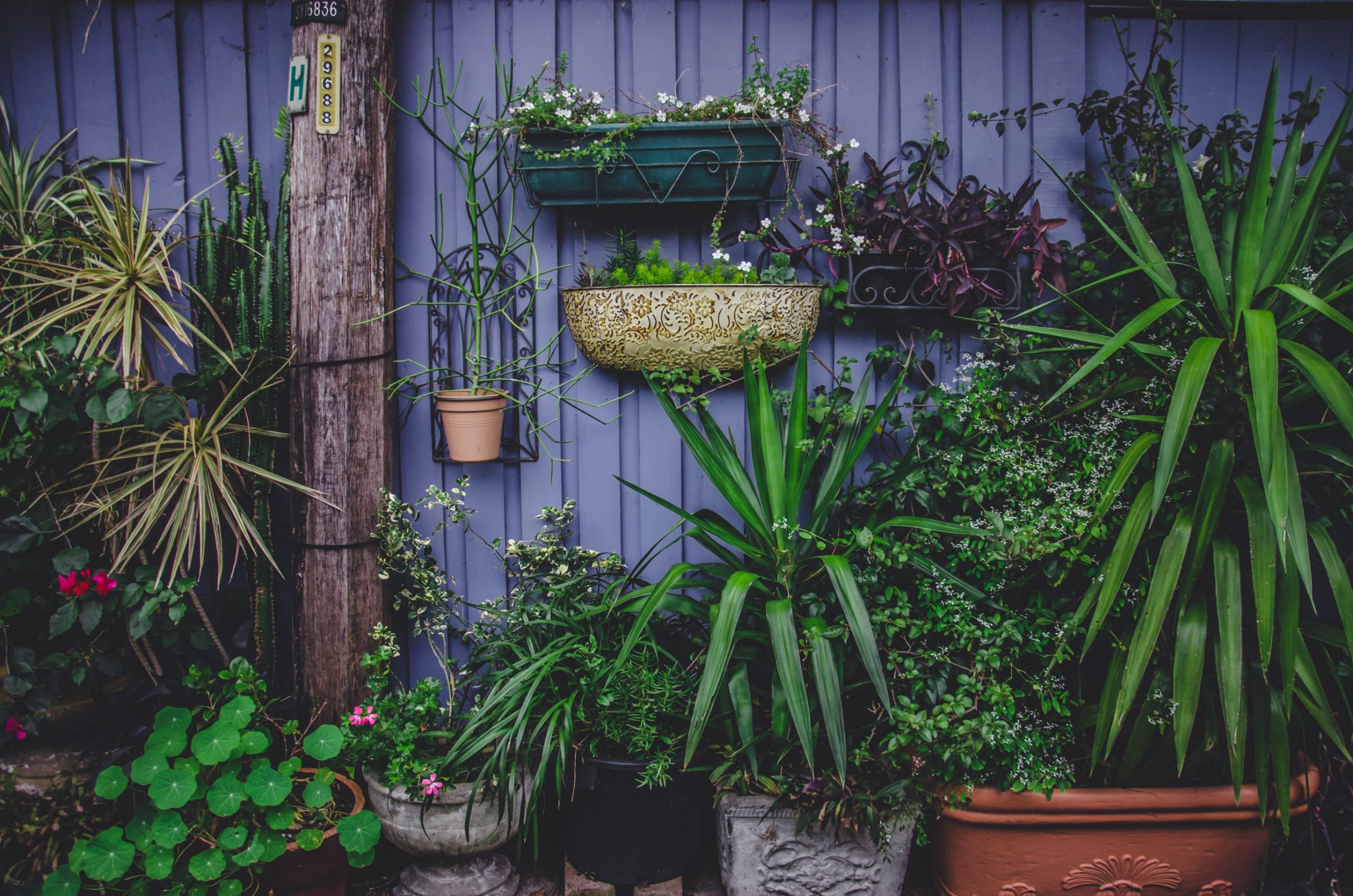 various plants in pots, Garden Glam Up: How To Make Your Garden Visitor Worthy