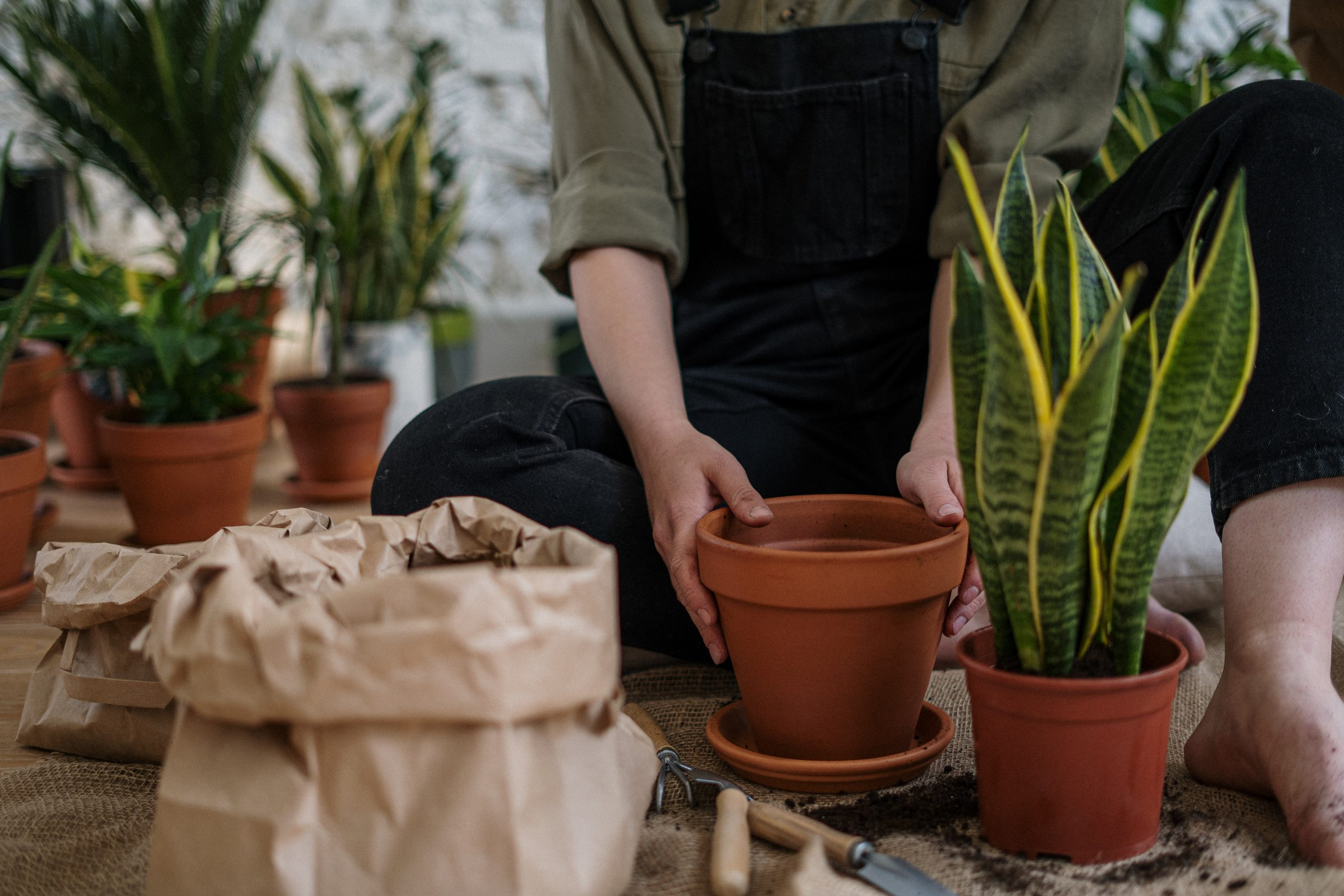 Person on overalls putting plants into pots