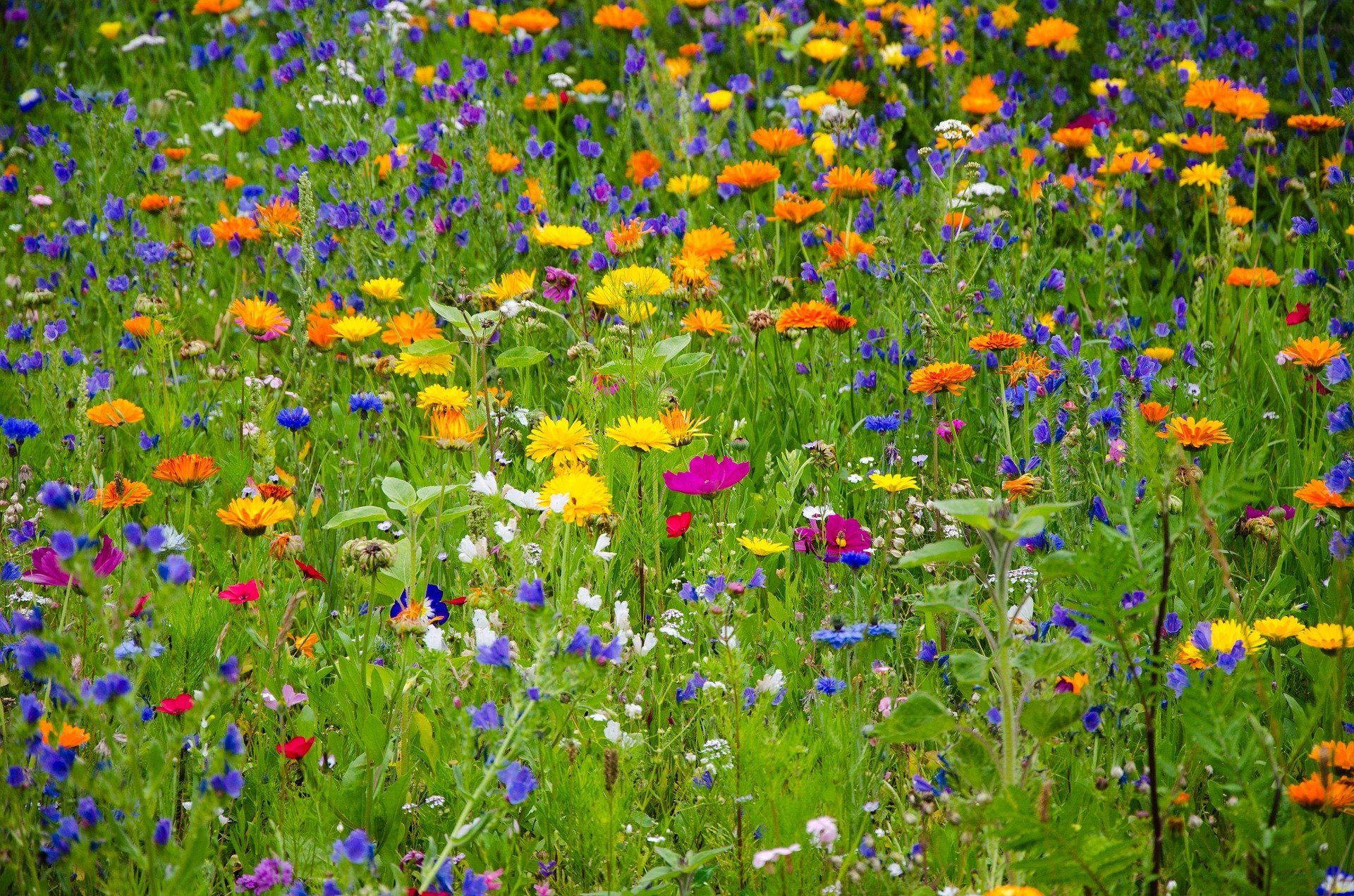 meadow of wildflowers; Making Your Garden More Environmentally Friendly