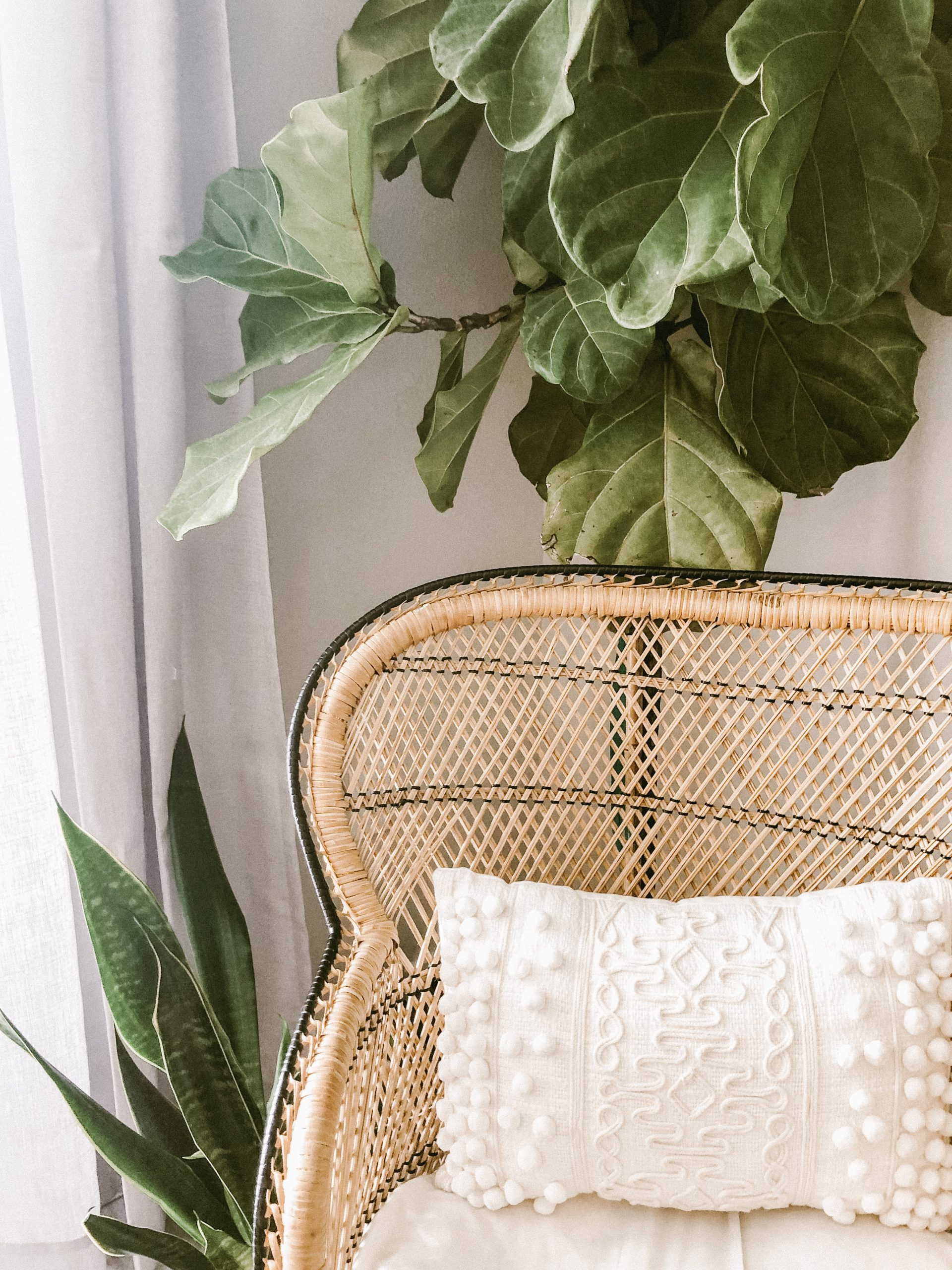large green plant behind wicker chair; Interior Design Trends You're Likely To See In 2022