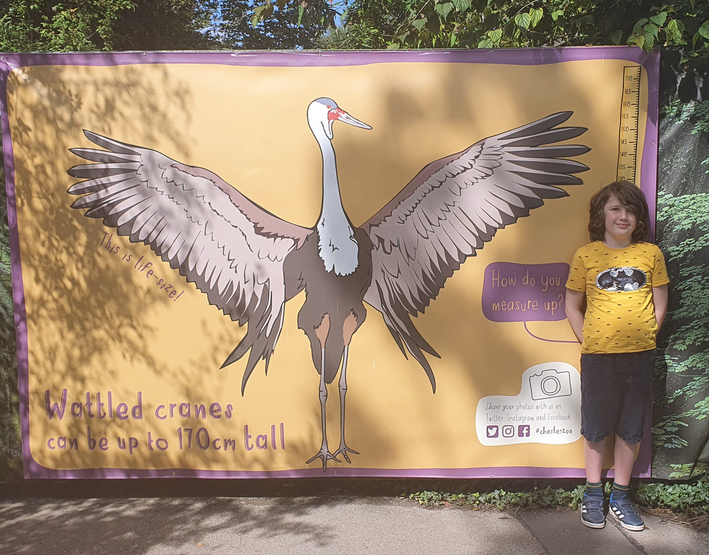 A boy stood next to a graphic showing the height of a crane bird; A boy, a zoo, and an autistic meltdown