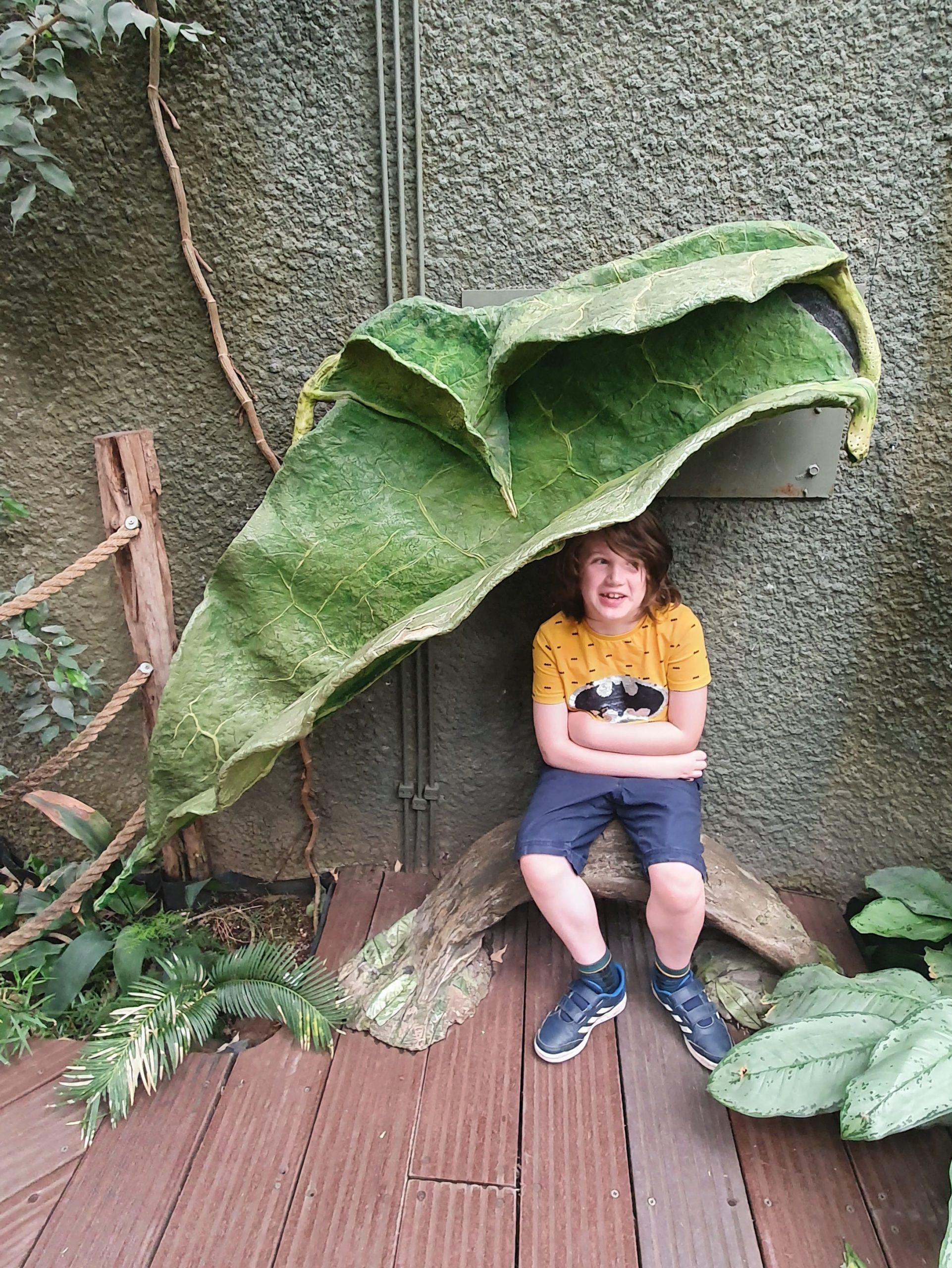 A boy sat under a giant fake leaf