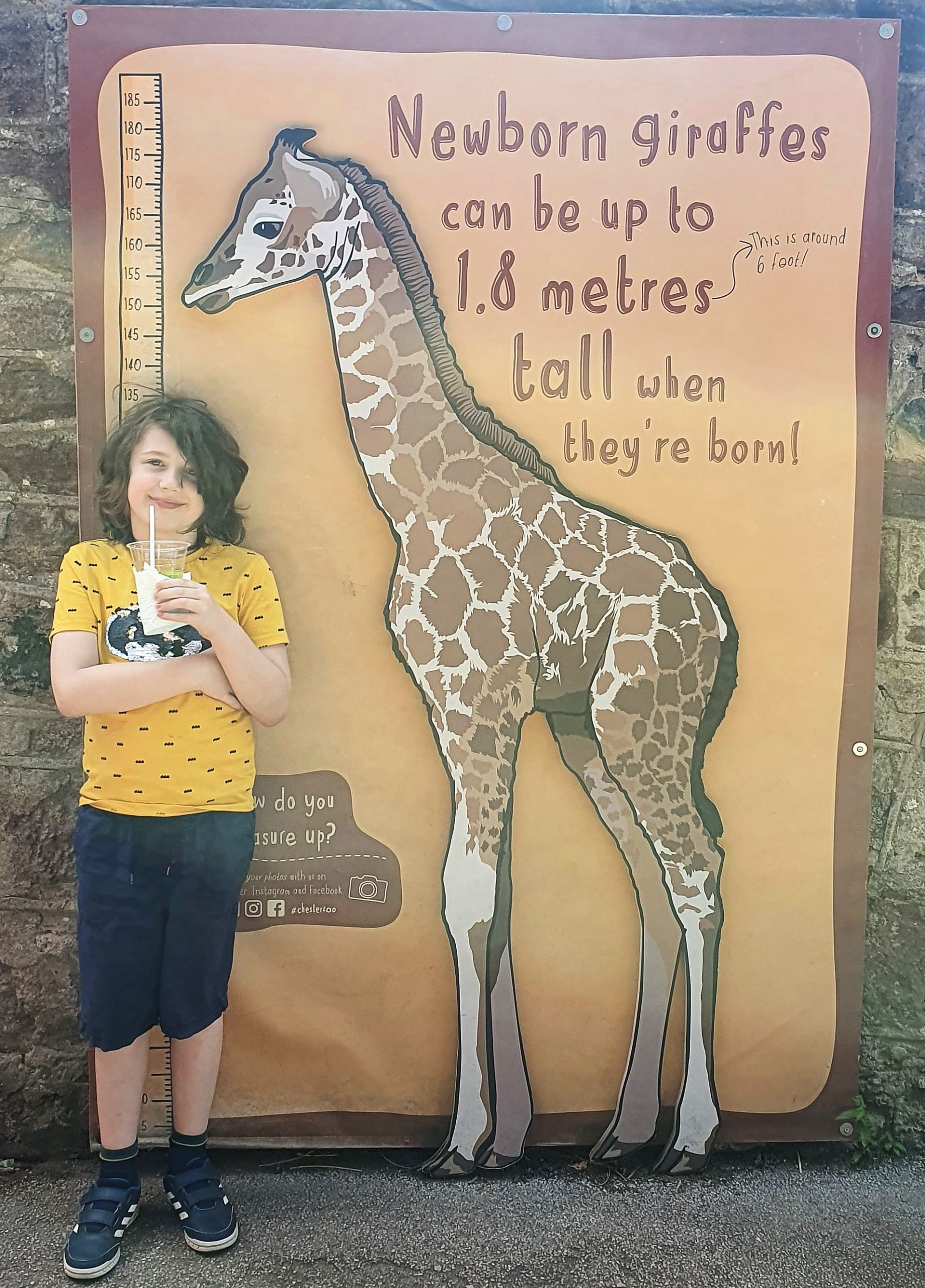 A boy stood next to a graphic showing the height of a baby giraffe